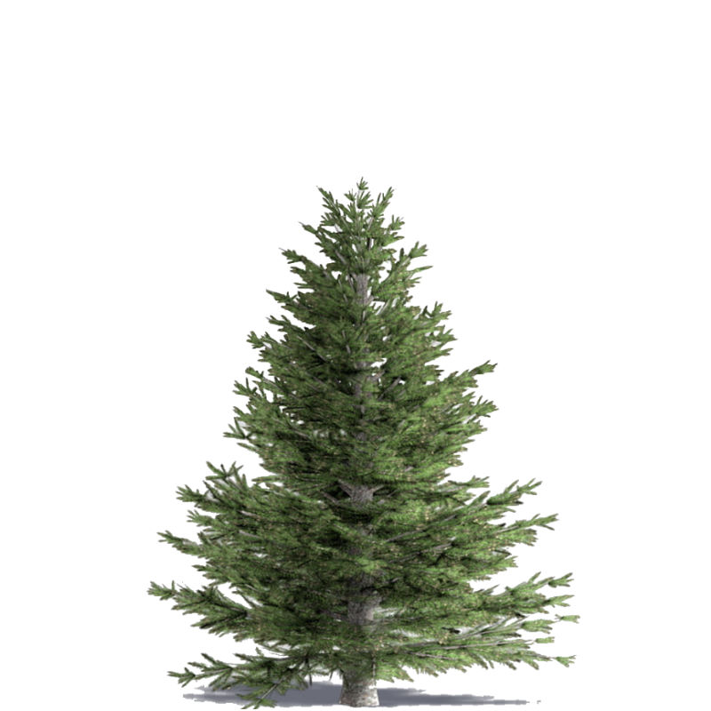 Christmas Tree - 6 Ft